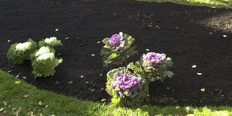 Dans mon jardin, à la suite du grand... (Photo Robert Nadon, La Presse)