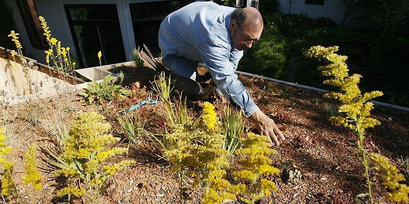 Tant que la densité des plantes est insuffisante,... (Photo françois Roy, La Presse)
