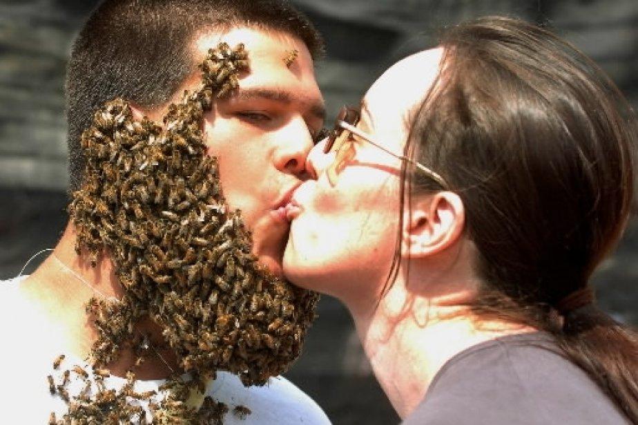 Kristine Pettit donne un baiser à Amsey McEown lors d\'une compétition visant à obtenir la plus imposante «barbe d\'abeilles», à Aylmer, en Ontario. Malgré les deux livres d\'abeilles qui lui collaient au visage, McEown n\'a pas remporté le premier prix… mais il s\'en est tiré avec une seule piqûre! | 1 mars 2011