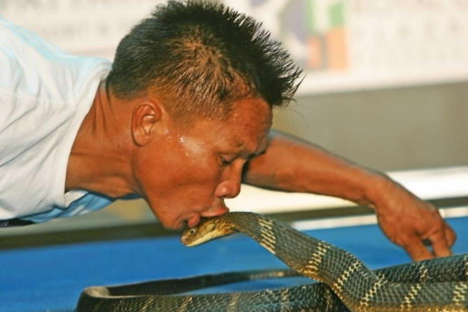 Le charmeur de serpents Khum Chaibuddee embrasse un cobra royal hautement venimeux à Pattaya, en Thaïlande. Il a établi un record le 7 octobre 2006 en embrassant 19 dangereux cobras dans un court laps de temps. | 1 mars 2011