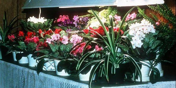L'éclairage artificiel permet de cultiver des semis et... (Photo: www.jardinierparesseux.com)