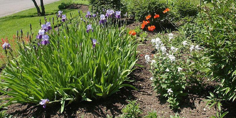 Plate bande facile pour jardinier paresseux larry hodgson collaboration sp ciale jardiner - Modele de rocaille pour jardin ...
