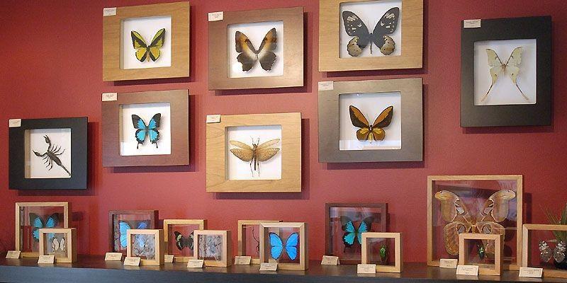 La salle d'exposition Passion Papillons, remplie de spécimens... (Photo Érick Labbé, Le Soleil)