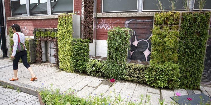 Même s'il existe d'autres murs verts extérieurs dans... (Photo André Pichette, La Presse)
