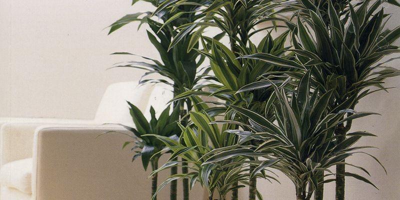 Saviez-vous que l'activité dépolluante de vos plantes d'intérieur est...