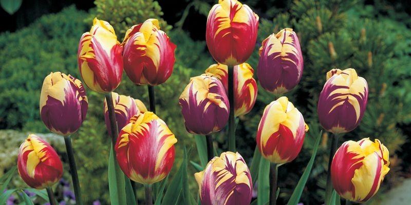 Au printemps, rien ne nous égaie plus que... (Photo fournie par Jon Kane)