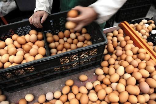 Trois nouvelles marques d'oeufs contenant de la mélamine ont été... (Photo AFP)