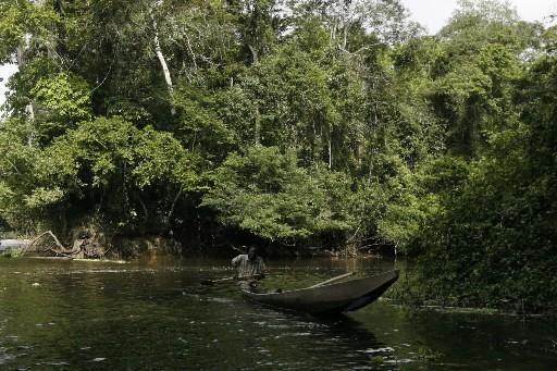 Une forêt tropicale... (Photo: AFP)