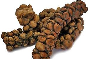 Le kopi luwak est un café très rare,...