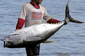 L'avenir du thon rouge en Méditerranée, menacé par la... (Photo: Reuters)