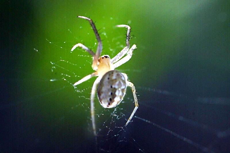 Pourquoi la peur des araignées est-elle si répandue? Un... (Photo: archives AP)