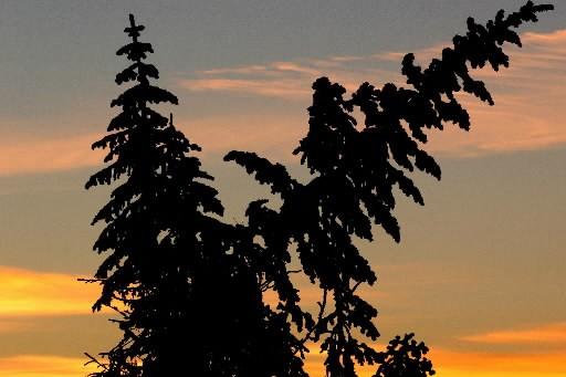 La protection des forêts, un moyen efficace de sauver le... (Photo: Le Quotidien)