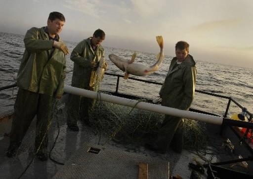De nombreux travailleurs de l'industrie de la pêche... (Photo: La Presse)