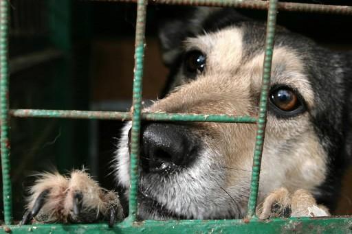 Un chien abandonné dans un refuge.... (Photo: archives AFP)