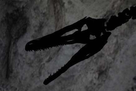 Réplique de la tête du dinosaure Austroraptor cabazai... (Photo: AFP)