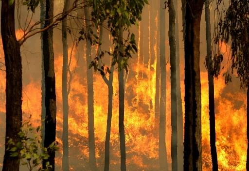 Un sous-bois brûlent sans que les pompiers puissent... (Photo: AFP)