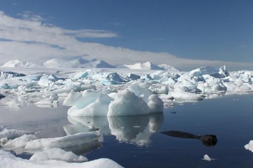 Un phoque se promène dans l'eau de l'Antarctique.... (Photo: Reuters)