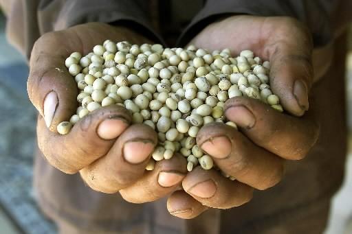 Un homme tient des graines de soja entre... (Photo: Reuters)