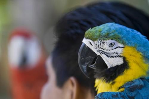 Un perroquet à Xel-Ha.... (Photo: Ivanoh Demers, La Presse)
