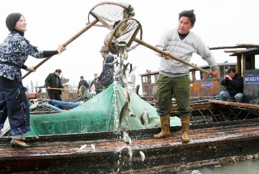 Dix millions de poissons, notamment des carpes, vont... (Photo: AFP)