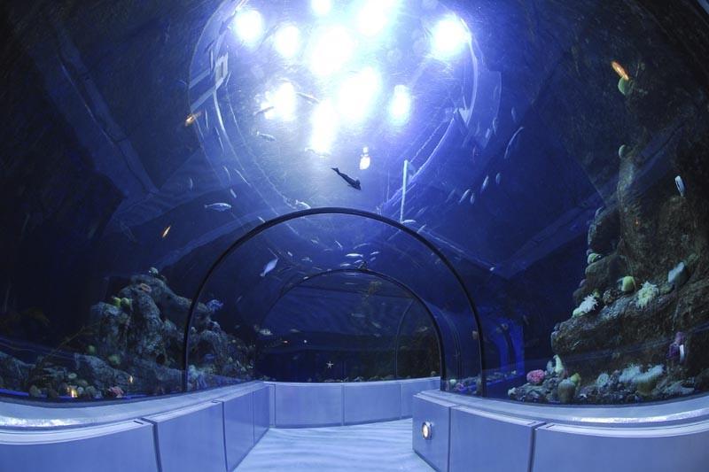 Le Grand Océan de l'Aquarium de Québec... (Photo: Steve Deschênes, Le Soleil)