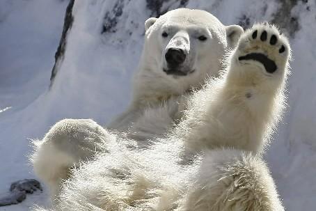 L'Arctique se réchauffe, et vite. Si vite, en fait, que les... (Photo: Reuters)