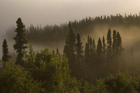 Une forêt dans la région de la Manicouagan.... (Photo: Ivanoh Demers, La Presse)