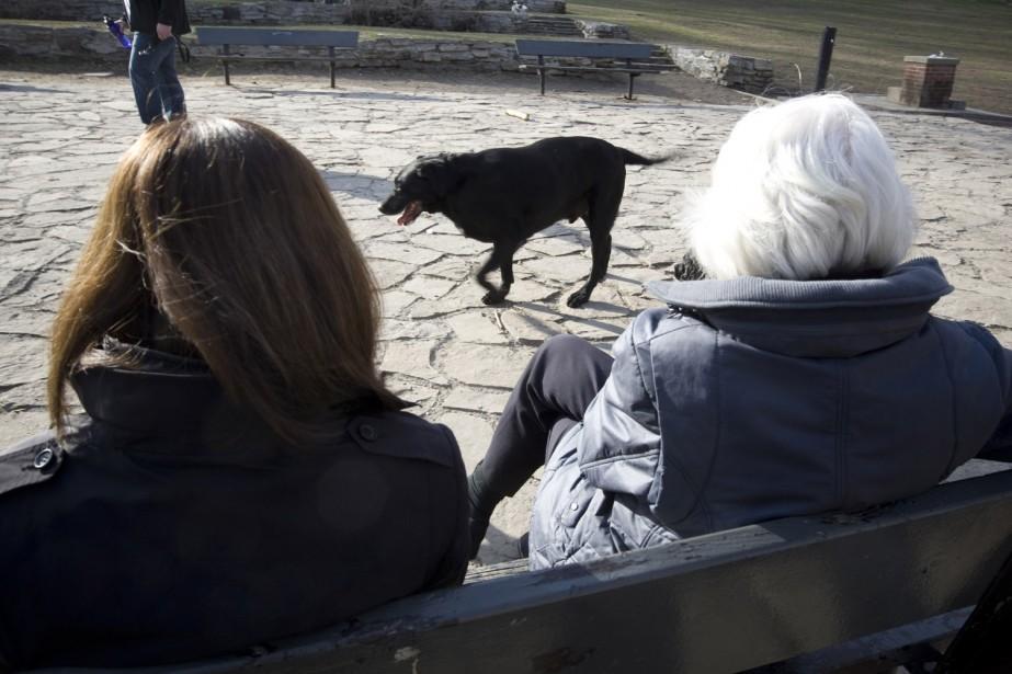 Notre journaliste aime les chiens.... (Photo: André Pichette, La Presse)