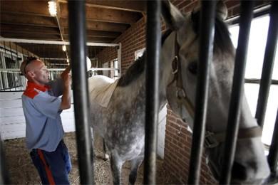 Dr. Pamela (c'est le nom du cheval) cotoie... (Photo: AP)