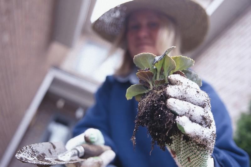 Les exercices commandés par le jardinage aident notamment...