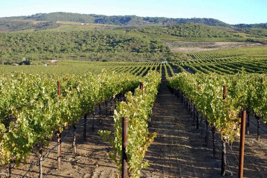 Un vignoble de Napa Valley, en Californie.... (Photo: Bloomberg News)