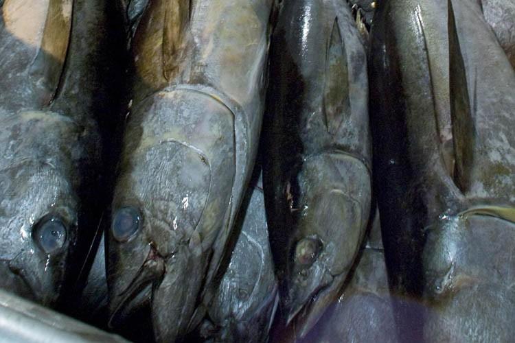 La pêche durable est-elle une préoccupation pour les grands... (Photo: AP)