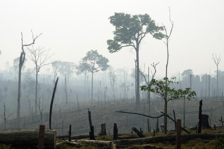 Raser la forêt amazonienne pour cultiver du soja ou faire de... (Photo: AP)