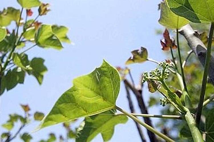 En Floride, un petit arbre sauvage commence à attirer l'attention... (Le Figaro)
