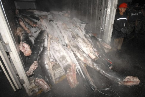 Des requins remplis de cocaïne ont été retrouvés... (Photo: Reuters)