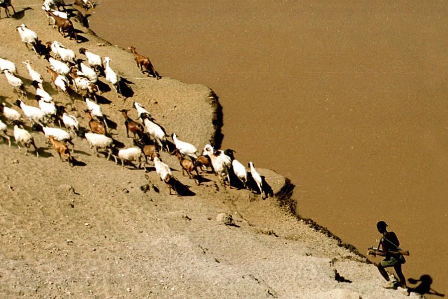 Un homme marche avec ses chèvres dans la... (Photo: Archives AP)