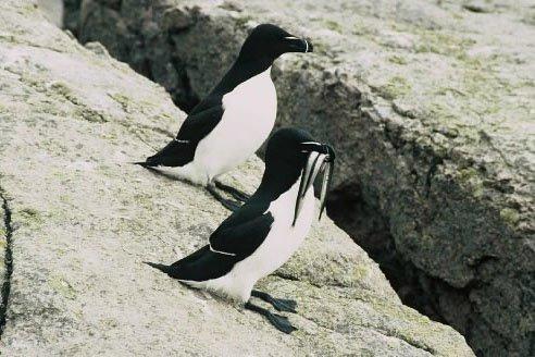 Des (faux) glaciers. De la neige. Des pingouins. En... (Photo: archivs La Presse)