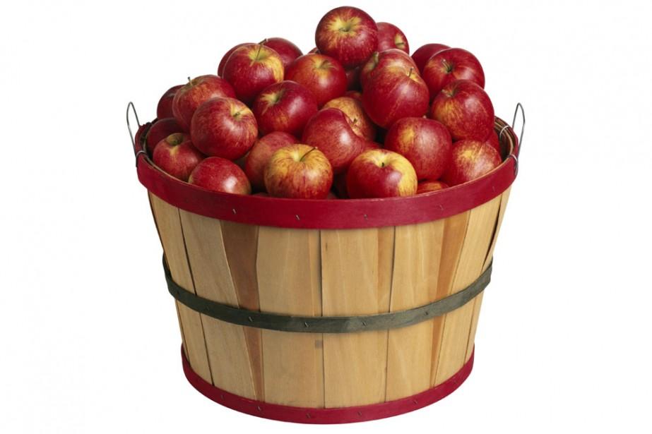 L'été semble à peine commencé que déjà les premières pommes s'accrochent aux...