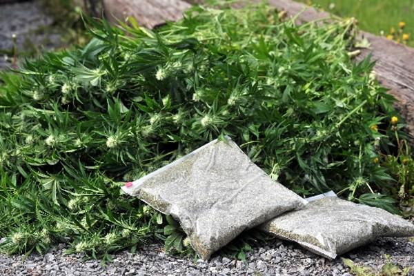 C'est finalement la plus grande saisie de cannabis à... (Photo: Le Nouvelliste)