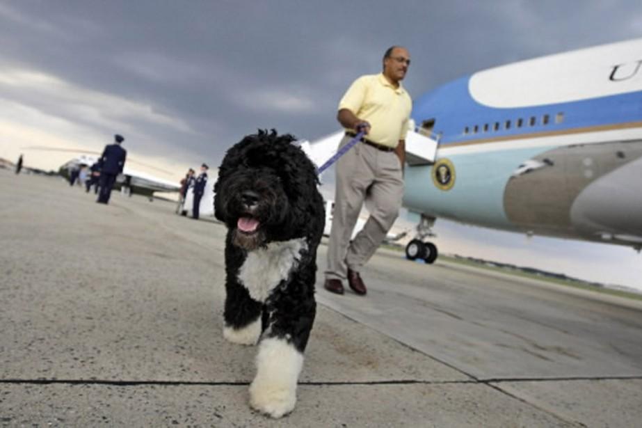 Bo Obama a fait un tour dans l'avion... (Photo AP)