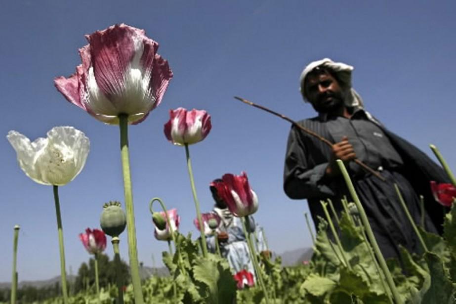 L'Afghanistan continue de produire 90% de l'opium mondial.... (Photo Reuters)