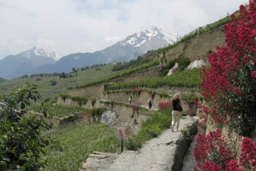La vigne est partout dans le Valais... (Photo: Mario Cloutier, La Presse)