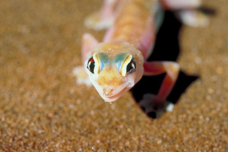 Un gecko... (Photothèque La Presse)