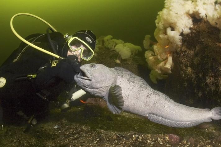 Un plongeur dans la mer Blanche.... (Photo: Marina Kochetkova)