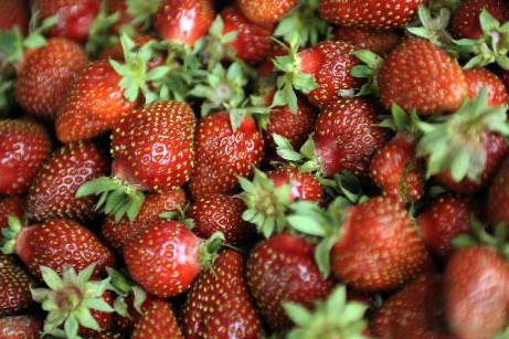 Amateurs de fraises, faites des réserves... (Photo: Bernard Brault, La Presse)