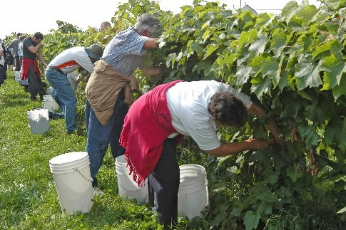 Au Vignoble de La Bauge, à Brigham, dans... (Photo: fournie par le vignoble de la Bauge)