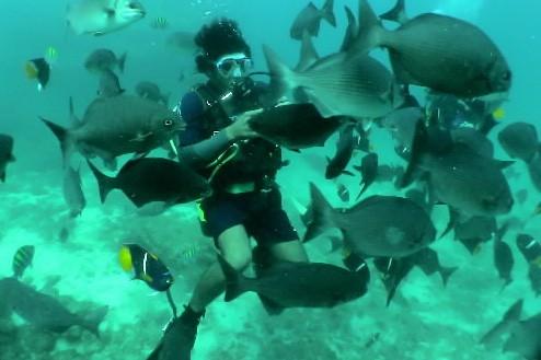 Un plongeur est entouré de poissons lors... (Photo: Bernard Brault, archives La Presse)