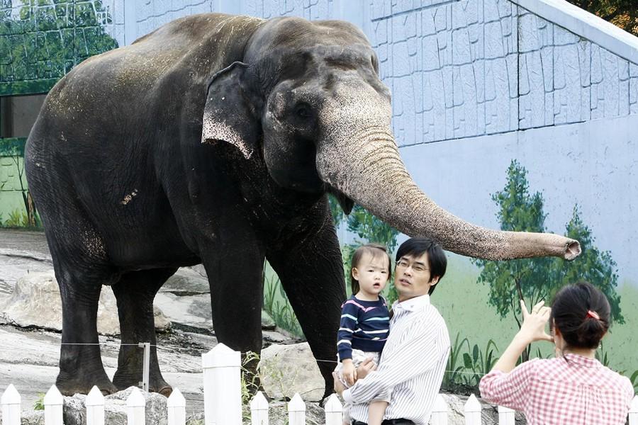 Une famille pose avec l'éléphant surnommé Taesani qui... (Photo: AFP)