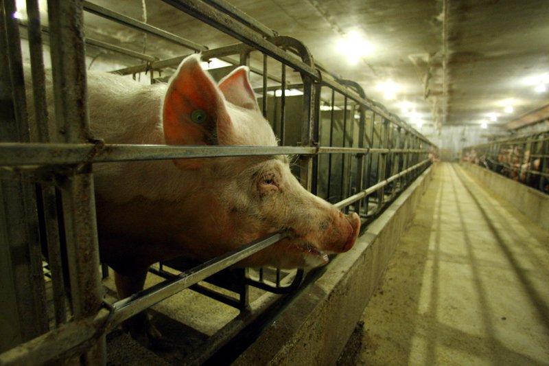 La consommation de viande est généralement en diminution... (Photo Martin Chamberland, Archives La Presse)