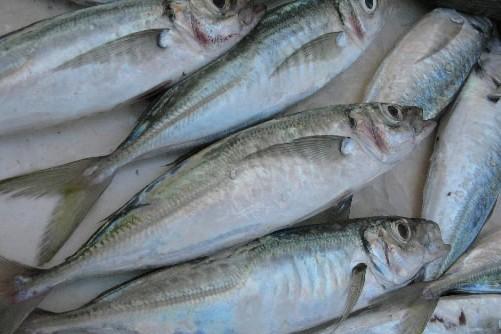 Certaines ressources alimentaires sont menacées... (Photo: Archives La Presse)